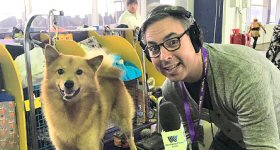 Westwood One News: It was a ruff day for Westwood One News. On eve of his coverage of the Westminster Kennel Club ''Best in Show'' award, which will be announced Tuesday night February 12, WWON's New York Bureau Chief Steve Kastenbaum gets in some interviews at Madison Square Garden.